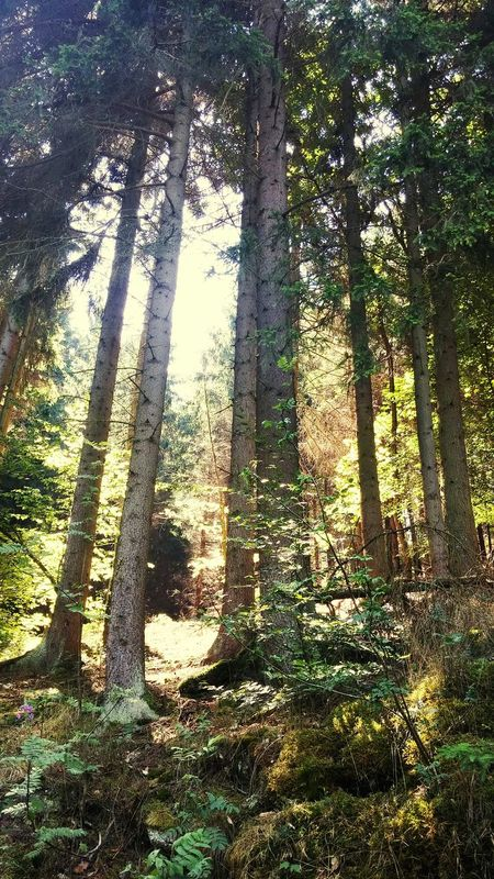 Taking Photos, Trees, Sunshine, Harz Im Sommer, Spazieren Und Fotografieren, Inspired, Nature, Ilikeit