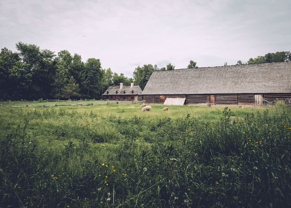 Beautiful stock photos of sheep, Animal Themes, Architecture, Barn, Beauty In Nature