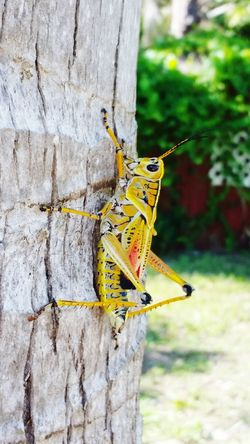 Grasshopper Up Close & Personal Colorfull