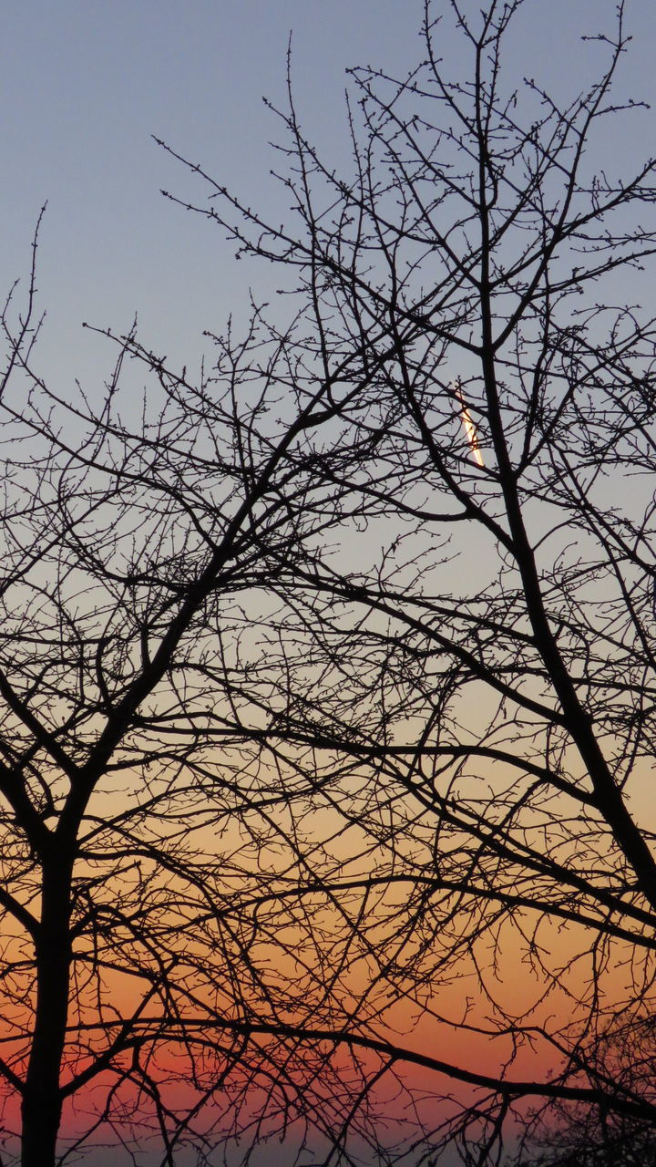 bare tree, branch, tree, nature, low angle view, beauty in nature, outdoors, no people, sky, tranquility, silhouette, sunset, scenics, day, animal themes