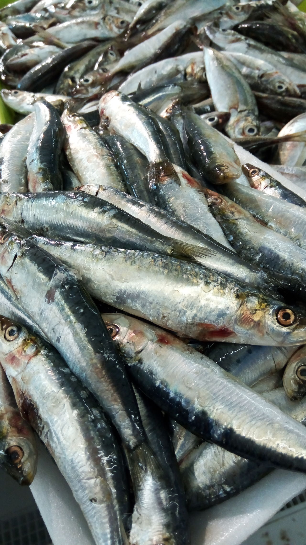 Abundance Backgrounds Choice Close-up Dead Animal Fish Fish Market Fishing For Sale Fresh Full Frame Galicia, Spain Group Of Objects Heap Large Group Of Objects Market Market Stall No People Retail  Sale Sardines Seafood Seafood Still Life Variation