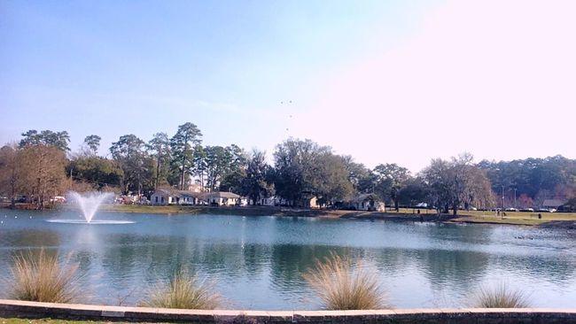 Vibes LakeElla Tallahassee Florida Views Nature Scenery Beautiful