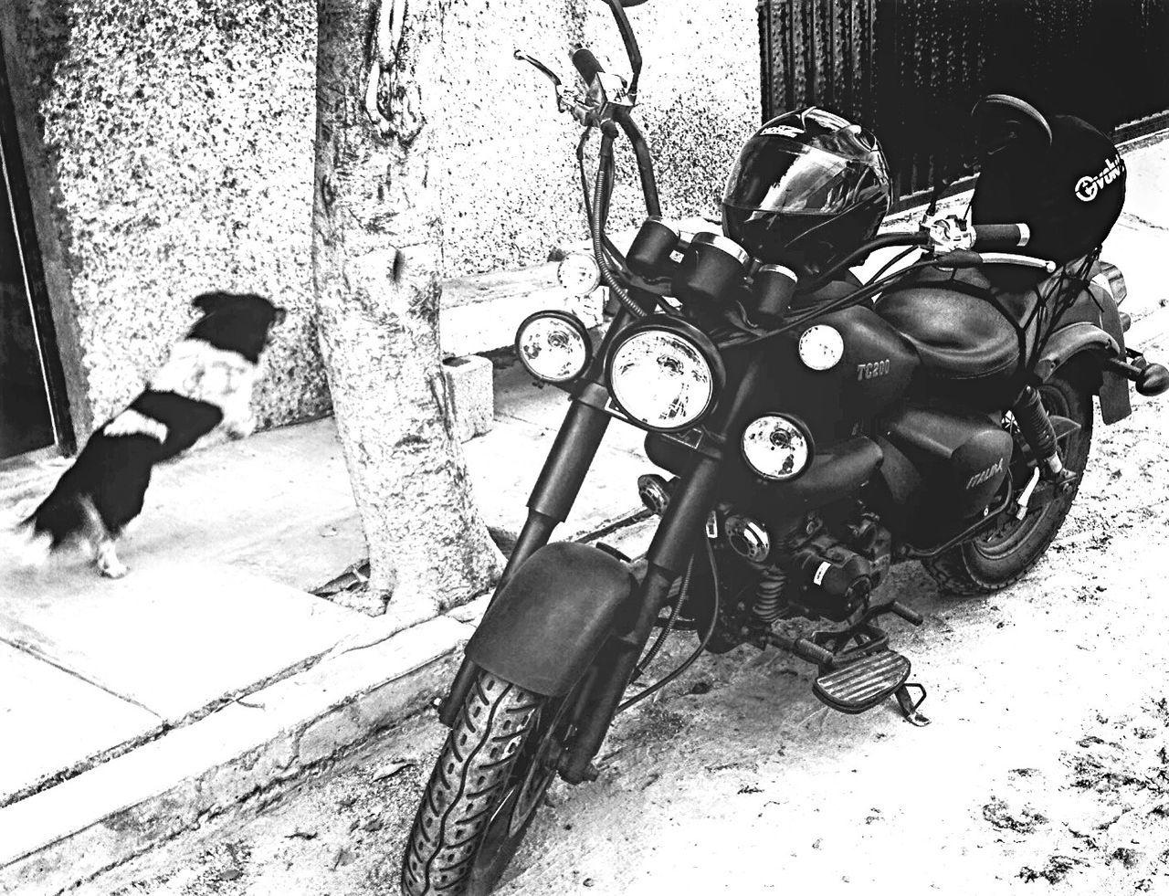 My Little Fat Girl. Motorcycle Dog Jumping Greatmoments Tc200 ITALIKA