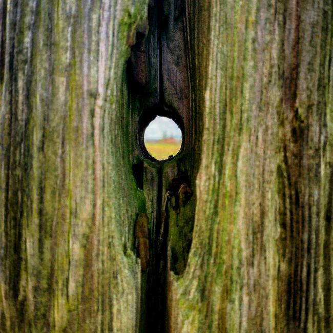 Through the hole Natures Blueprint Natures Treasures Getting Inspired Perfection Natural Beauty Walking Around Farmland Through My Eyes Focus On Foreground Selective Focus Looking To The Other Side What Lies Beyond...