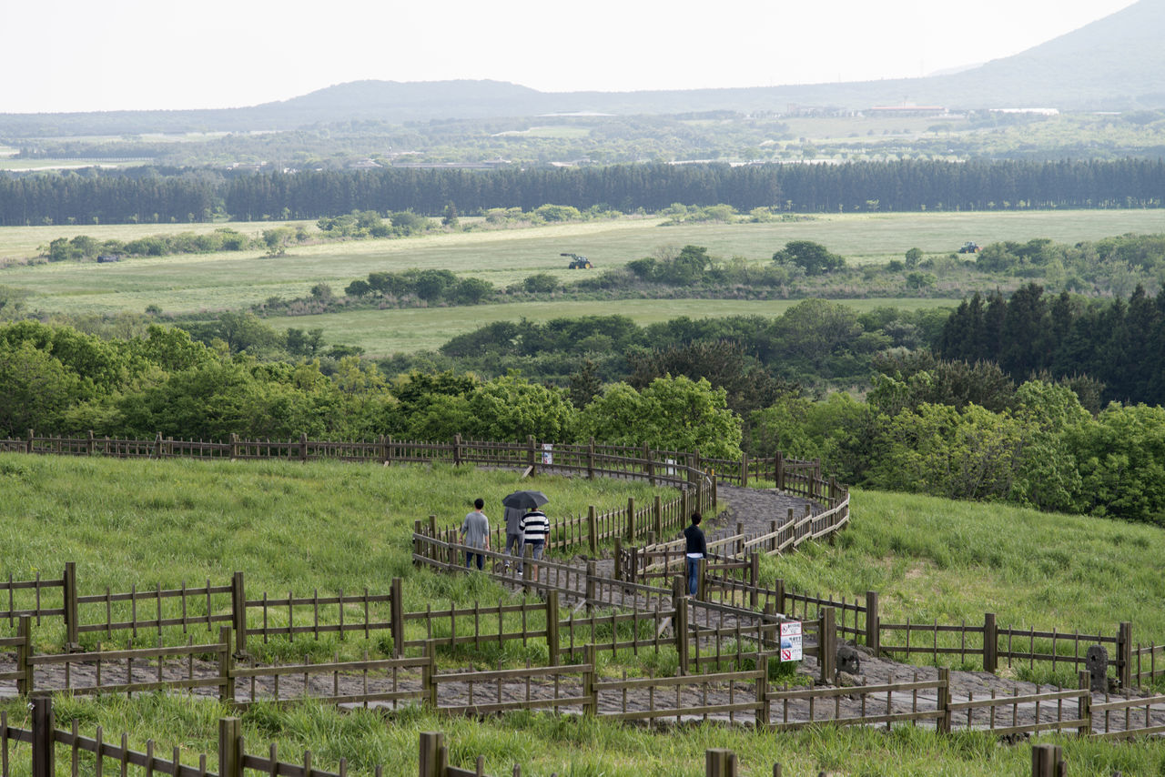 view of Sangumburi, a dormant volcano crater in Jeju Island, South Korea Agriculture Beauty In Nature Crater Crop  Day Dormant Volcano Farm Field Growth High Angle View JEJU ISLAND  Landscape Mountain Nature No People Oil Pump Outdoors Rural Scene Sangumburi Scenics Sky Tree