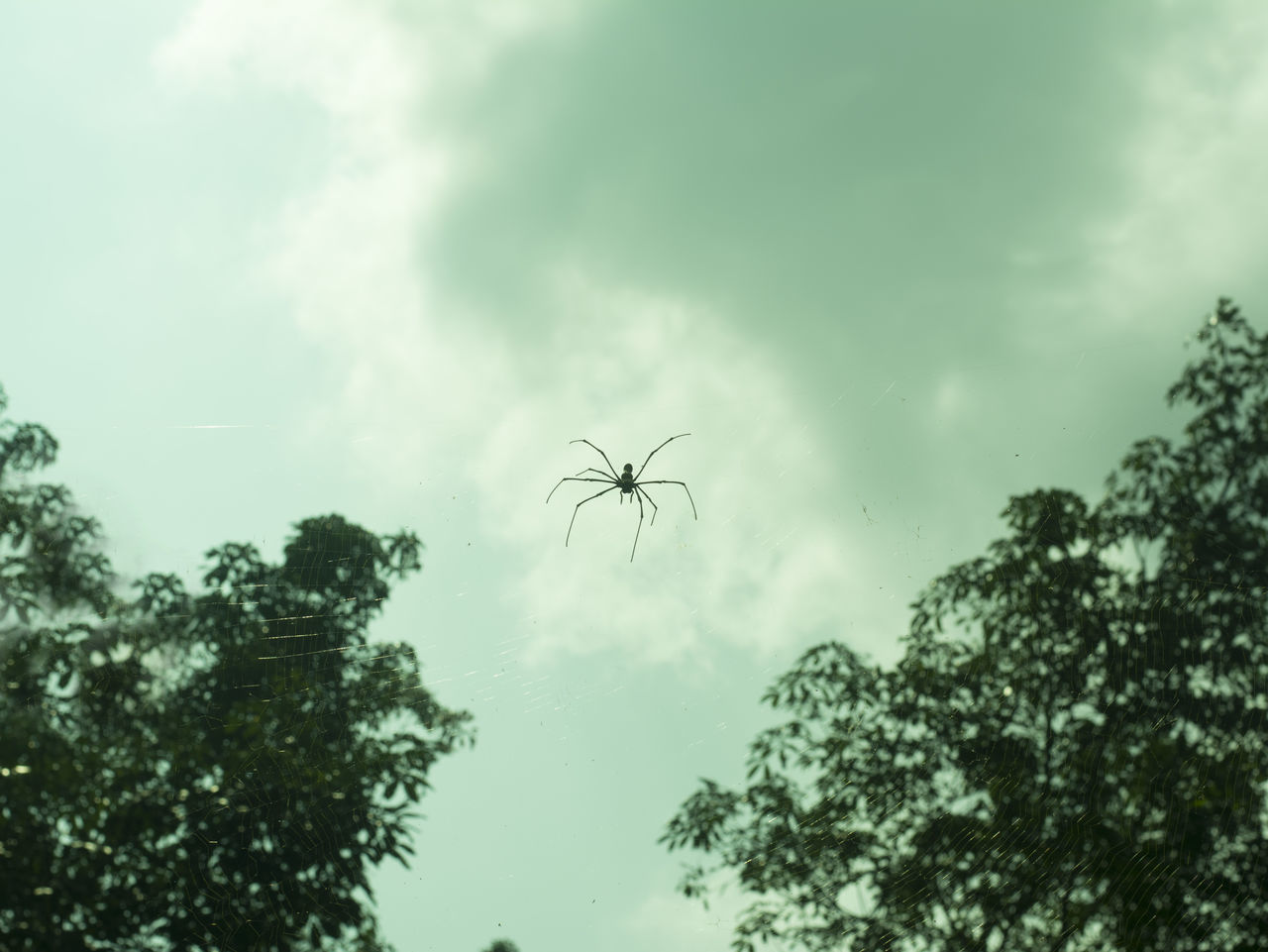 Tree Cloud - Sky No People Nature Sky Spider Spiderworld Spider Web Outdoors NikonD5200 Beauty In Nature Low Angle View