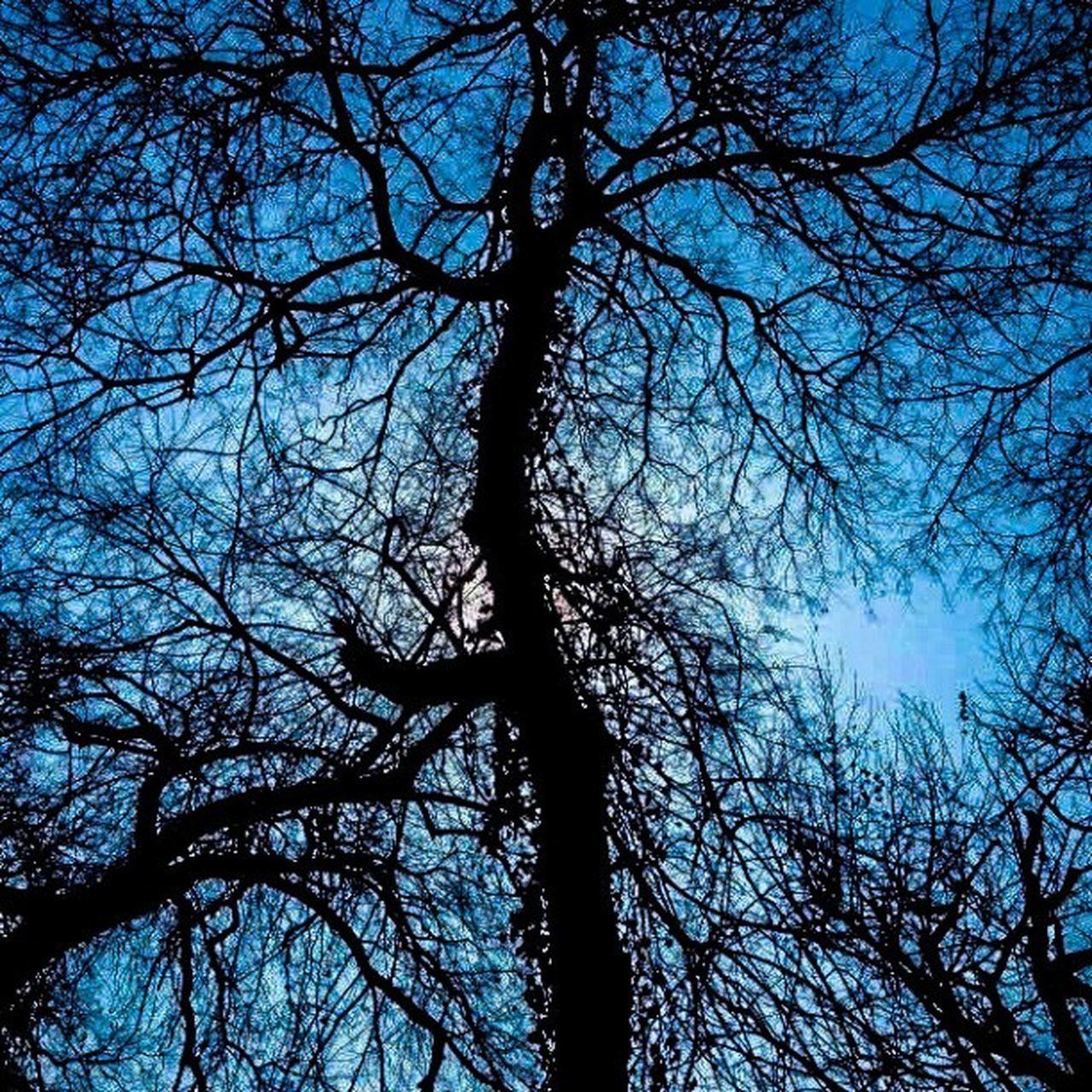 Égi ágazat Fa Agak Sunshine Tree bluesky photoofthday Budapest mik mupafoto10