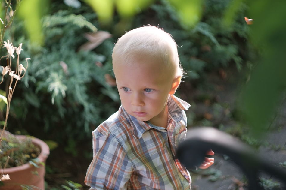 Discovering Terrace Jungle Blond Hair Boys Child Childhood Children Only Day Innocence Nature One Boy Only One Person People Portrait