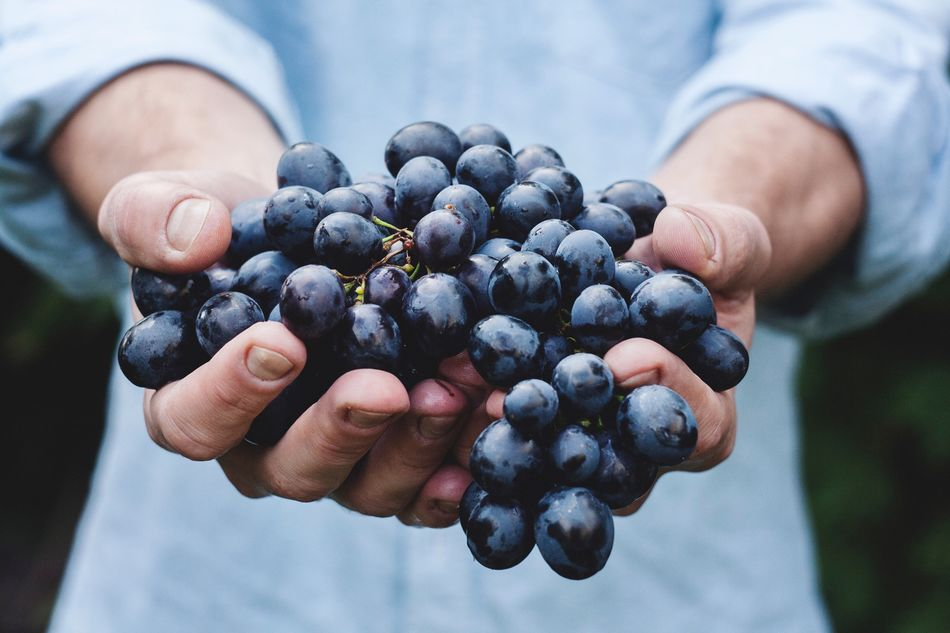 Beautiful stock photos of wein,  25-29 Years,  Blueberries,  Blueberry,  Bunch