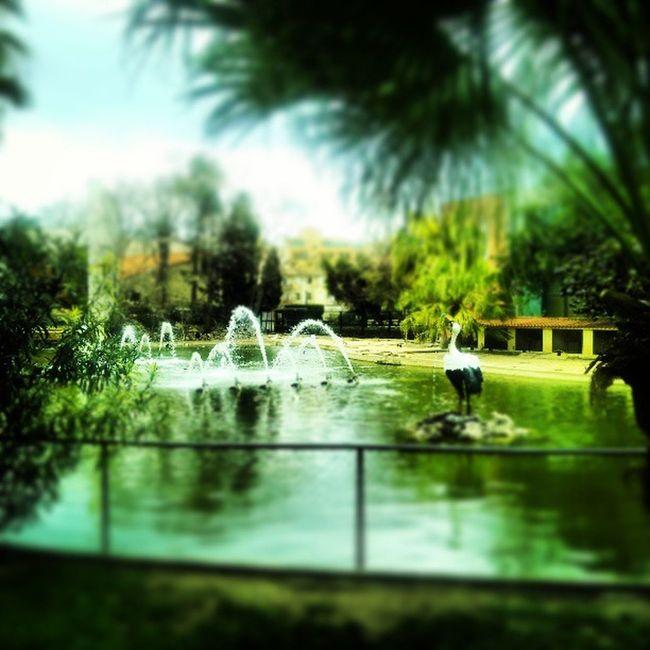 #JardinesDelReal #Valencia #garden Garden València Jardinesdelreal