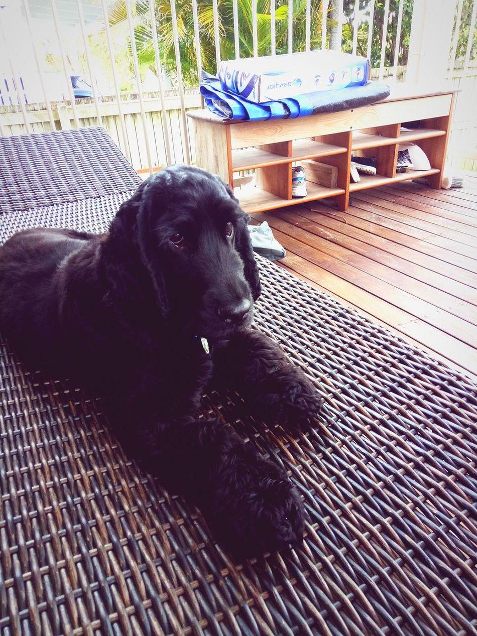 Animal Themes Dog Photography Dog Love Close-up Relaxedand Happy Australia