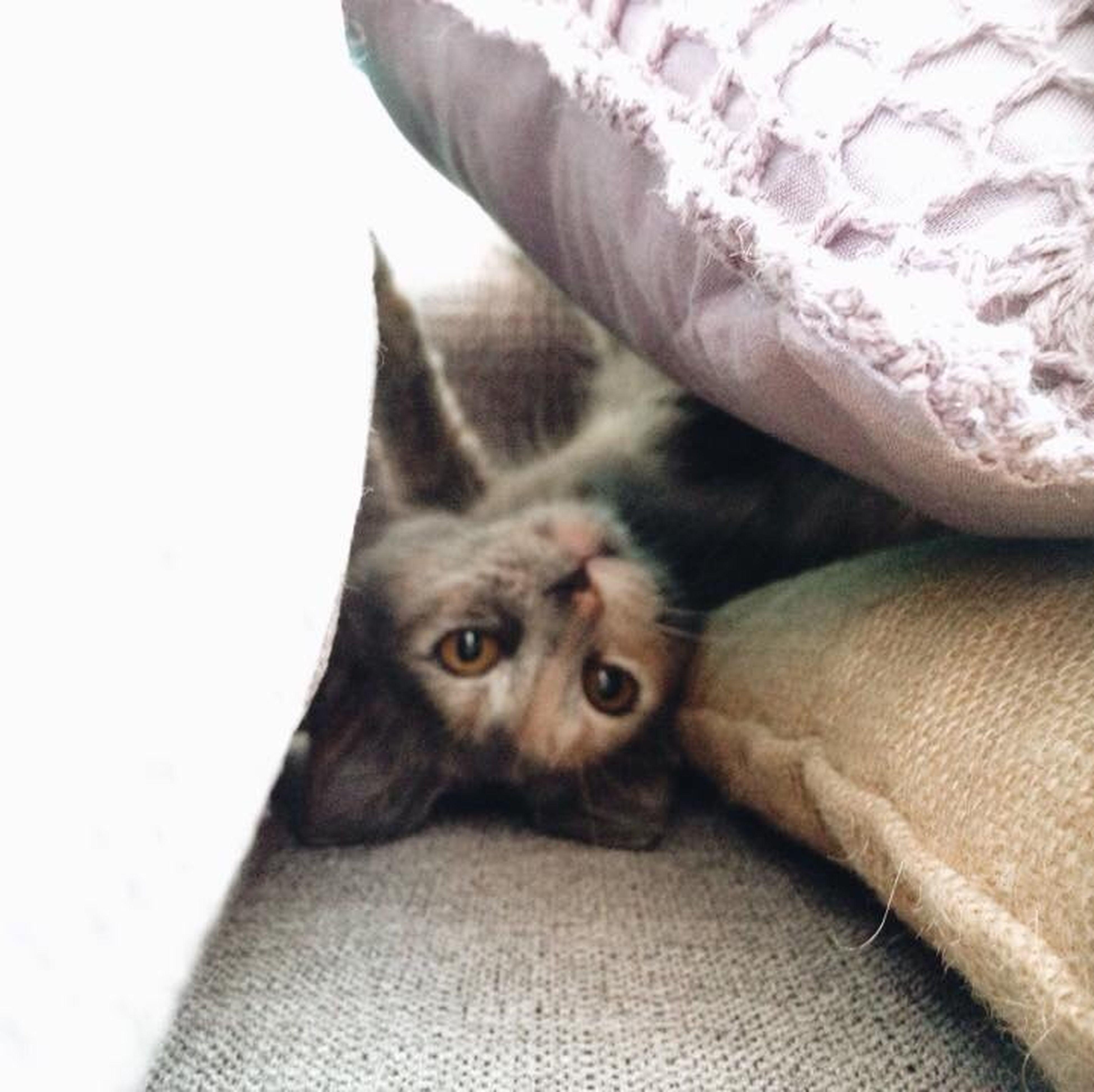 Hello World Relaxing Cat