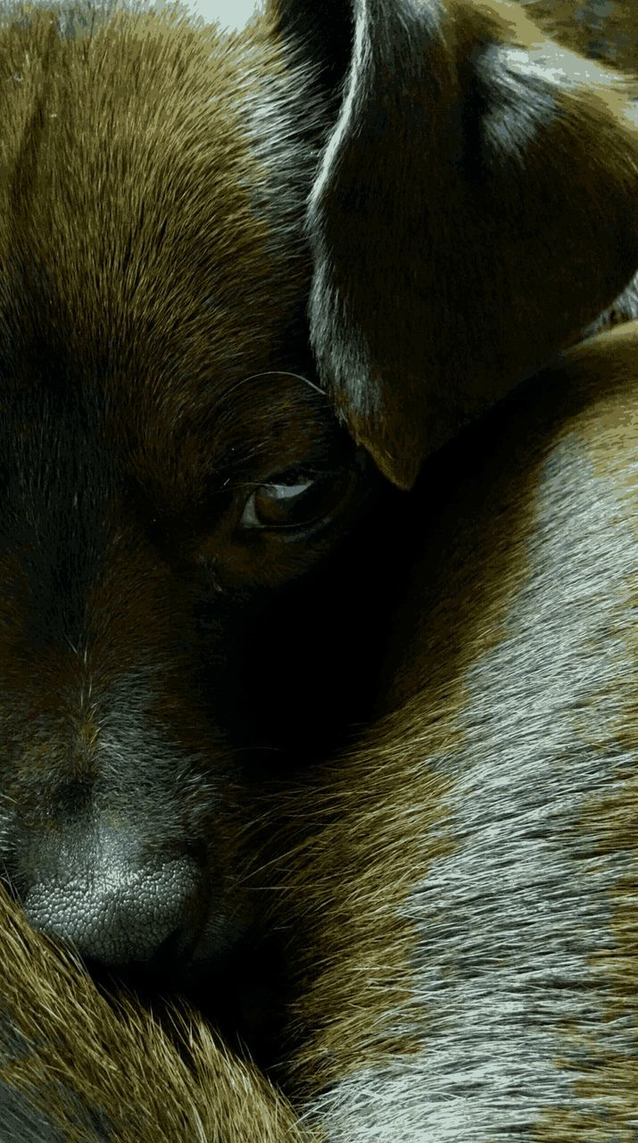 one animal, dog, mammal, animal themes, pets, domestic animals, no people, close-up, indoors, day