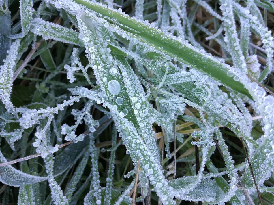Winter Snow Cold Temperature Frozen Outdoors Frosty Mornings Frosty Frosty Nature Frost