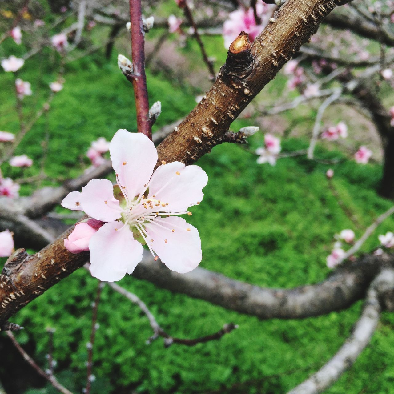 Flower Fragility Growth Nature Petal Freshness Day Outdoors Focus On Foreground Beauty In Nature Tree Close-up Flower Head Branch Plant No People