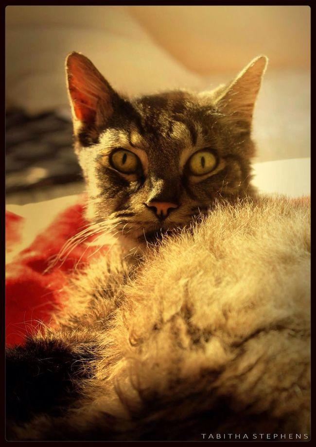 Rude awakening. Cat Photo Photography EyeEm Best Shots