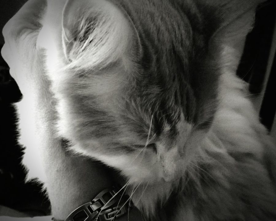 Lovetocuddle Cuddle One Animal Goodmorning :) Cat My Love❤ This Is... Still Focusing Sobriety  Eyeem A Happy Woman Norwegian Forestcat  Good Times Starting Over New Life 16days
