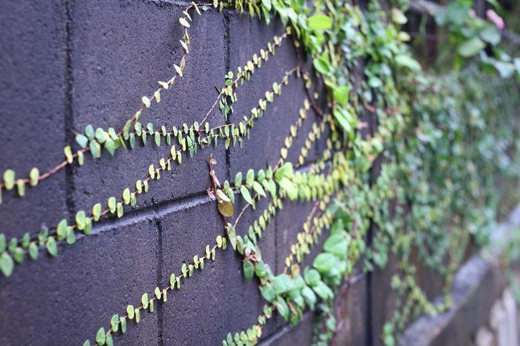 Plant Outdoors Leaf No People Nature Morning Okinawa Beauty In Nature TreeAftertherain Canon Meyer-Optik-Görlitz Oreston Oreston 1.8/50 Vintage Lens Oldlens