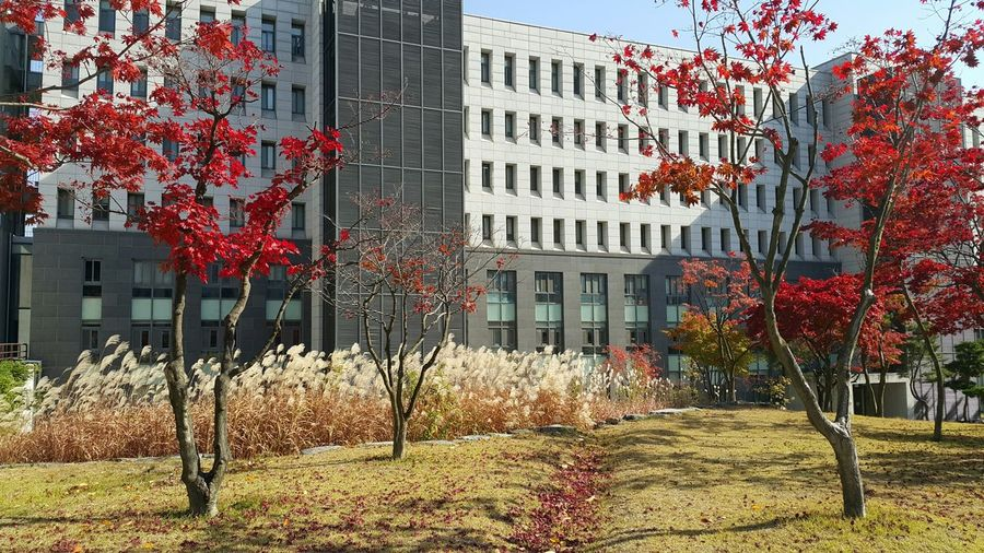 Myongji University @Yongin, Korea