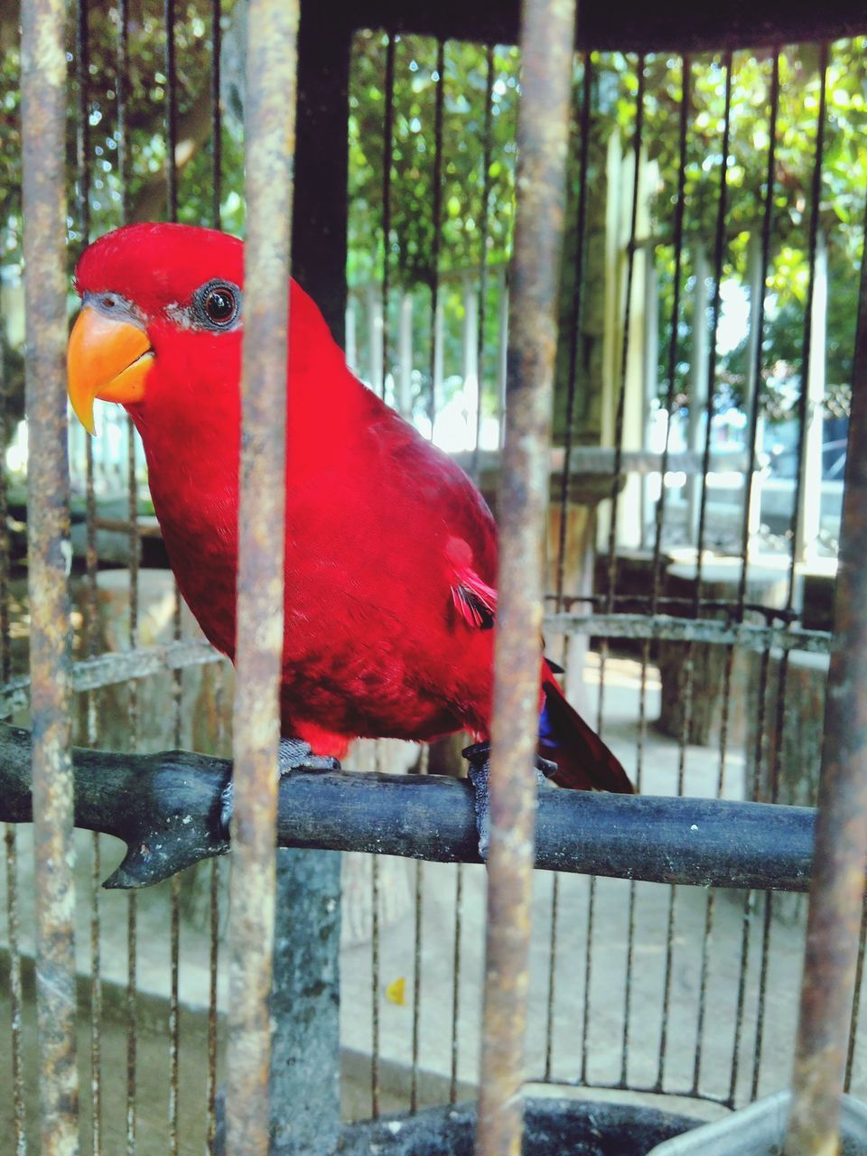 one animal, bird, red, animal themes, scarlet macaw, parrot, full length, animals in the wild, animal wildlife, tree, perching, no people, macaw, day, beauty in nature, nature, outdoors, close-up
