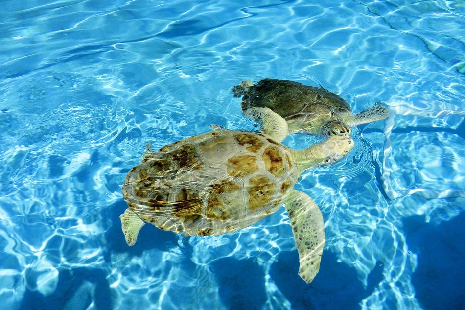 Beautiful stock photos of schildkröte, Animal Themes, Animal Wildlife, Animals In The Wild, Beauty In Nature