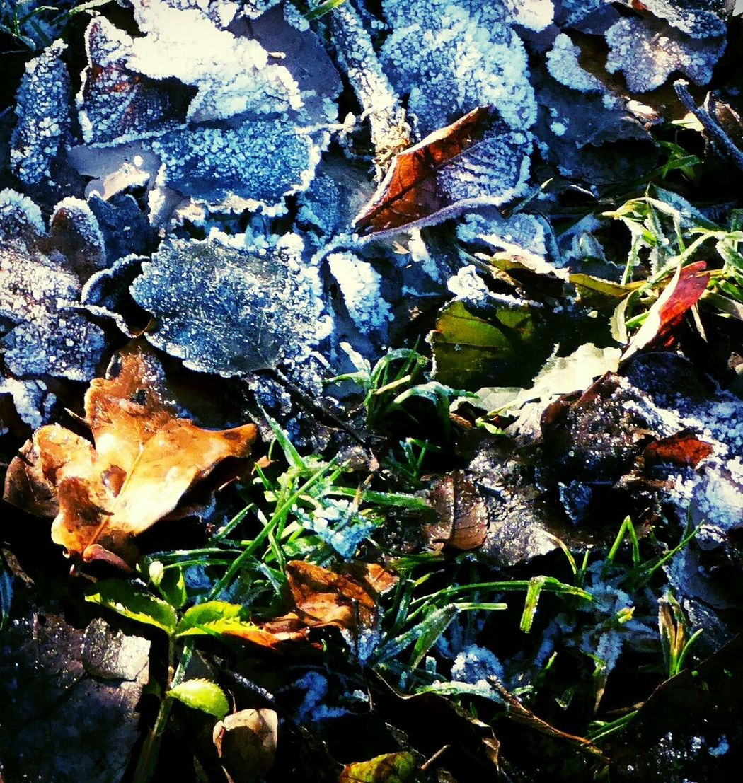 Frozen Nature Frozen Leaf Beauty Of Evanscence Sunny Day 🌞 For My Friends 😍😘🎁 Cold Temperature Close-up Playing With Effects Fragility Tranquility Tranquil Scene Frozen Grass