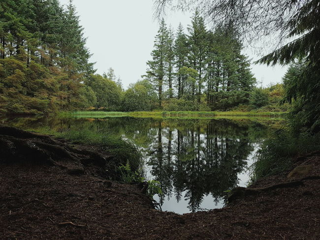 Castlewellan Forest Mountain Water Pool Reflection Reflect Peace Nature Trees Castlewellan Forest Park Newcastle Countydown County Down Northern Ireland Northernireland Ireland Beautiful
