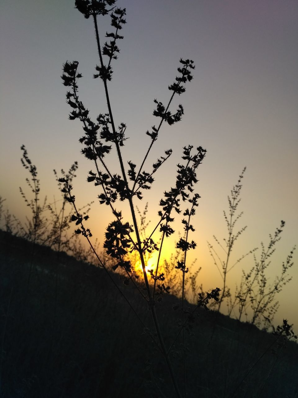 growth, nature, sunset, silhouette, plant, beauty in nature, tree, no people, sky, tranquility, outdoors, landscape, clear sky, day