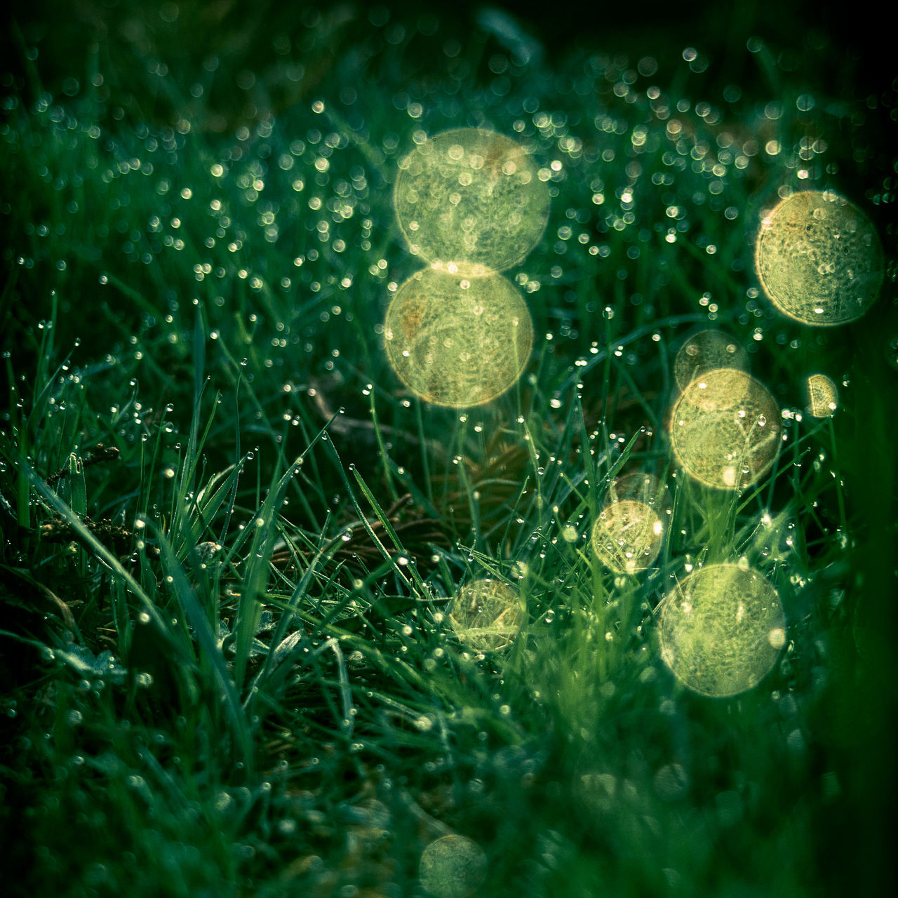Bokeh Bokeh Bubbles Close-up Day Grass Green Color Nature No People Outdoors