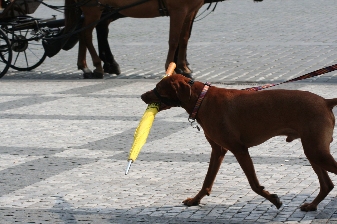 Dog Umbrella Yellow Umbrella Prague
