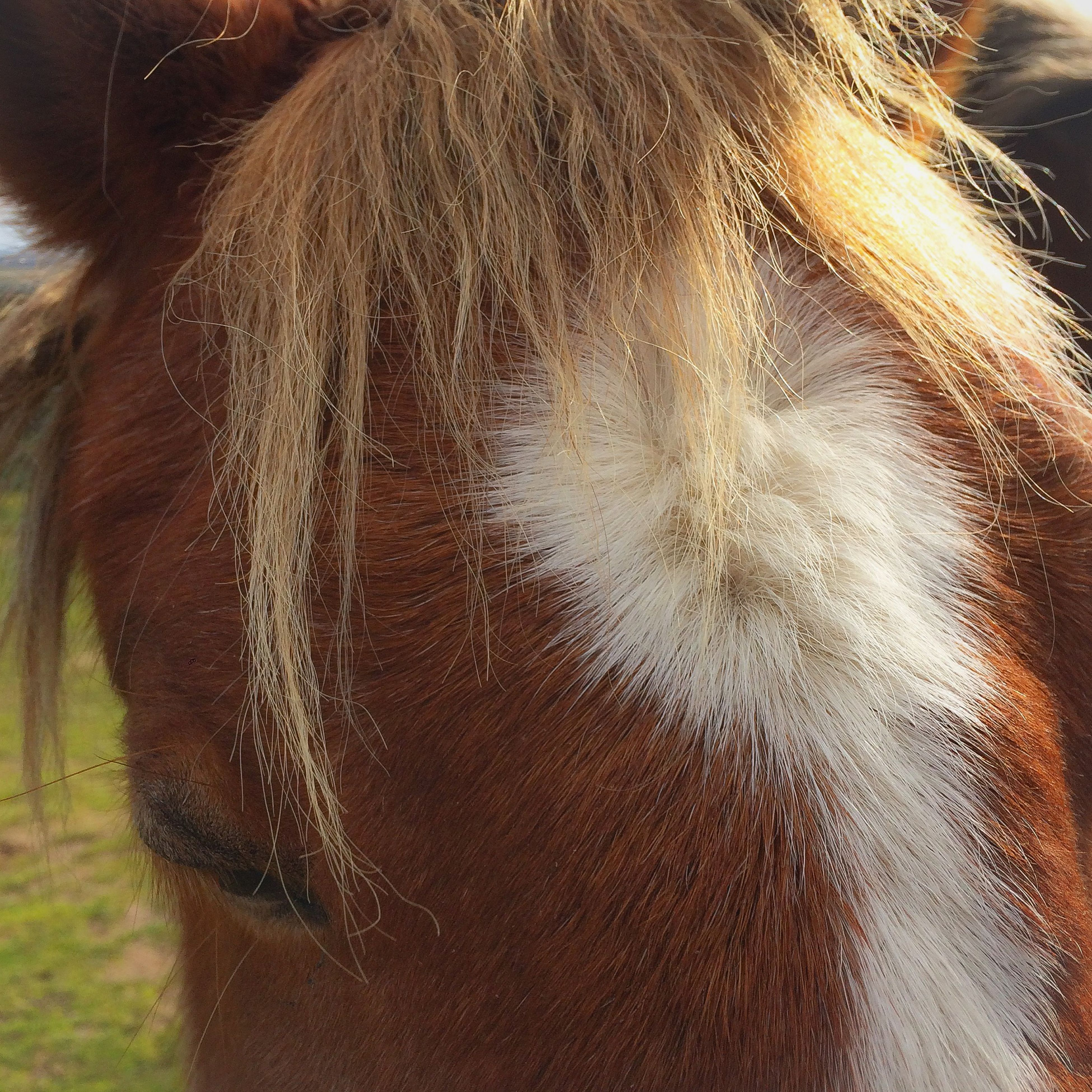 close-up, mammal, one animal, animal themes, part of, animal body part, domestic animals, horse, animal hair, animal head, one person, human hair, day, outdoors, focus on foreground, sunlight, nature, livestock, cropped