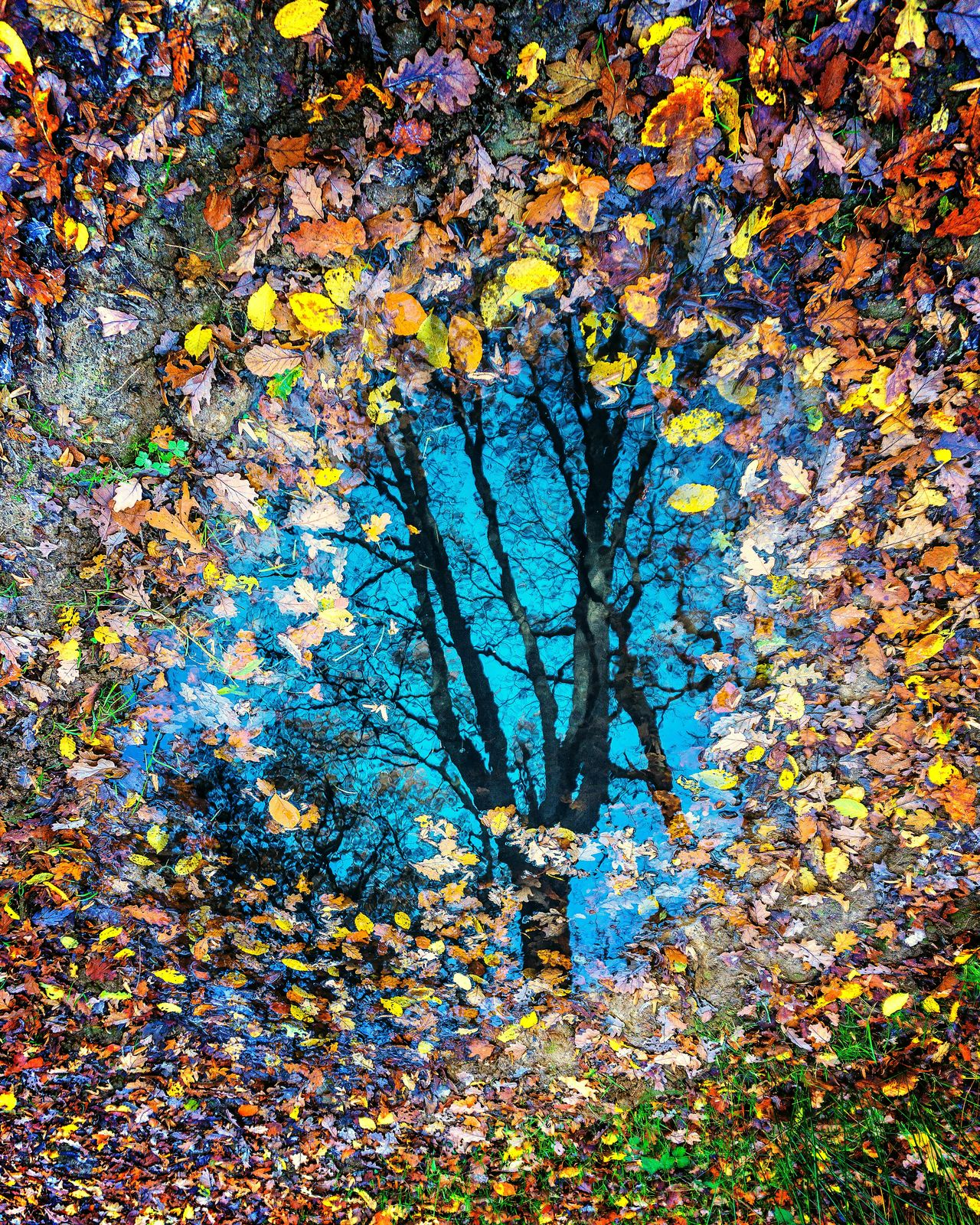 Reflet d'automne. Multi Colored No People Full Frame Backgrounds Pattern Close-up Textured  Day Outdoors Sky Frosted Glass Nature Autumn Colors Leaf Beauty In Nature Reflection Reflection Lake Puddle Refection Tree