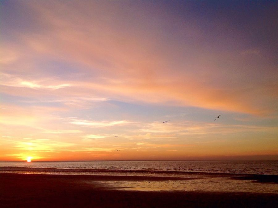 Pastel Power Sunset Sea And Sky EyeEm Nature Lover EyeEm Birds Winter Beach Day Beachphotography