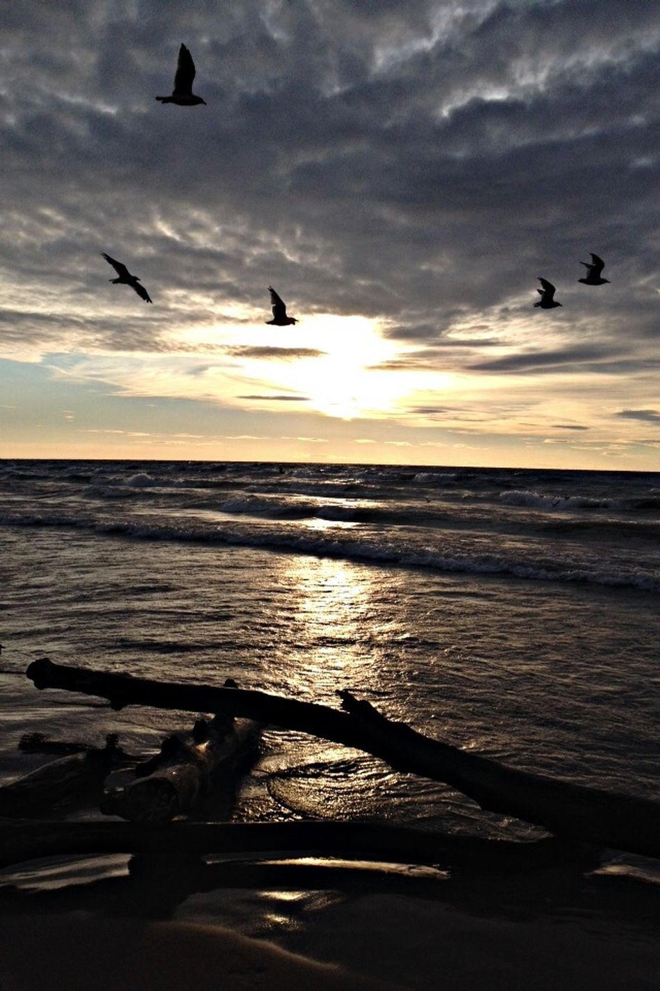 Sunset Summer Birds I took this while on a camping trip with friends. The birds just flew in front of my camera, almost like they knew it would create the perfect picture