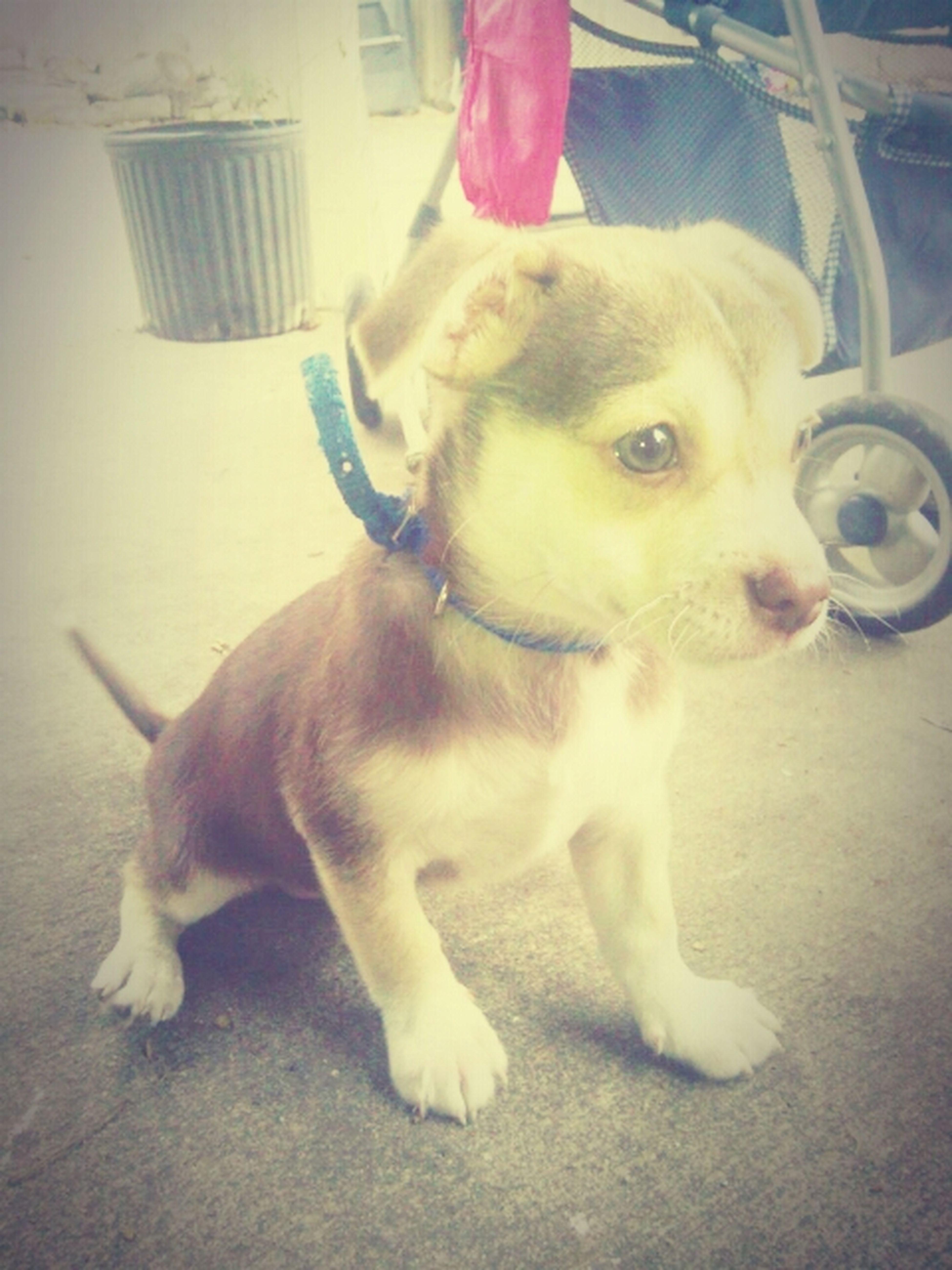 My New Dog /.\