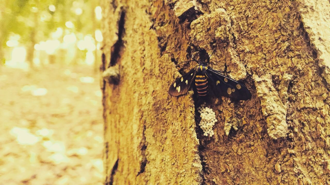 Resting in Peace!! Tree India Nature Photography Bug College Trunk Detail Wings Afternoon Filter Resting Relax Calm