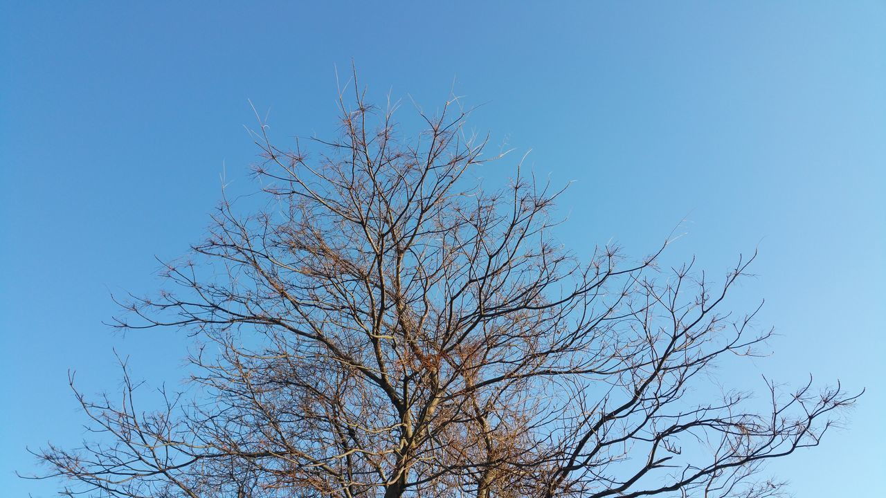 bare tree, blue, clear sky, nature, branch, low angle view, tree, outdoors, beauty in nature, no people, day, sky