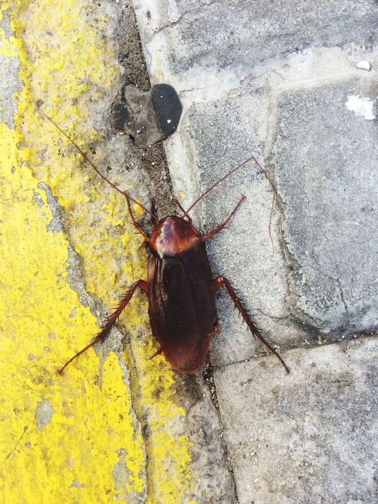 La Cucaracha Mallorca Holiday Animals Horror