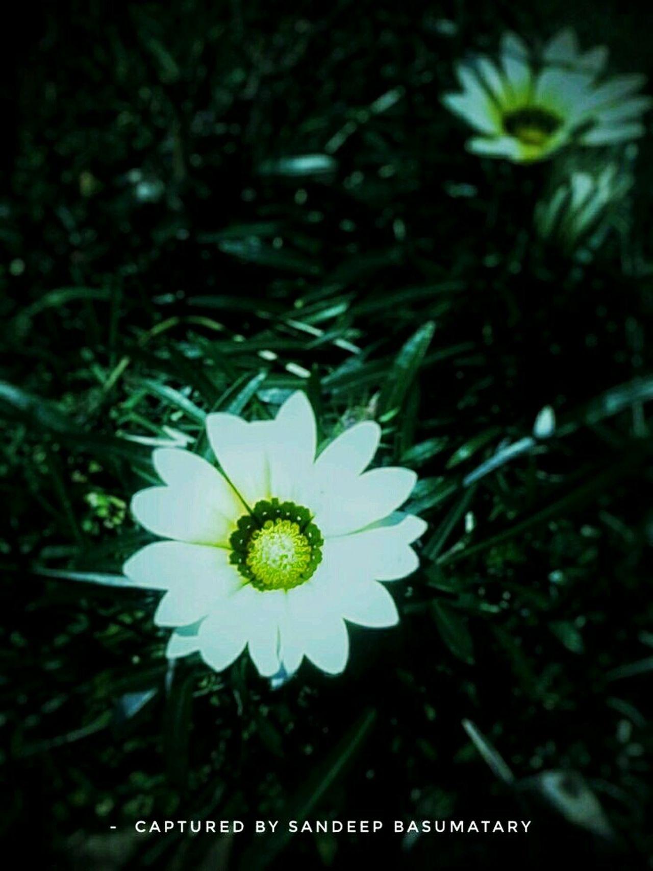 Flower growing along the Church garden...