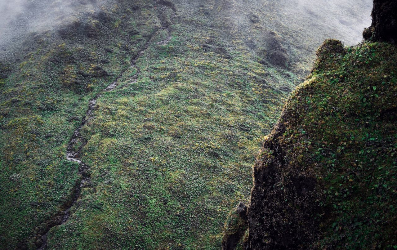 Nature Beauty In Nature Rock - Object Scenics Green Color Tranquility No People Geology Tranquil Scene Outdoors Growth Tree Day Landscape Mountain Landscape Forest Path Wild Mist Green