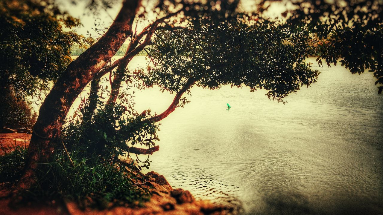 tree, nature, beauty in nature, water, tranquility, growth, scenics, tranquil scene, outdoors, day, no people, branch, sky