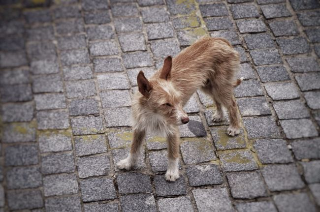 Street dog, ugly but free