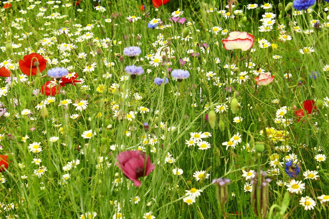 Colorful Flowers Blooming On Field