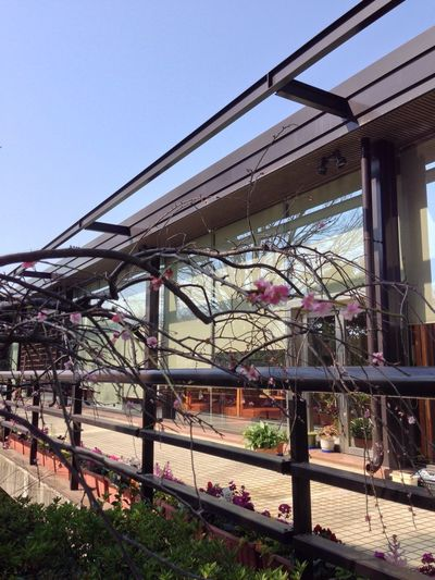 Flower Restraunt お散歩倶楽部 Hanging Out