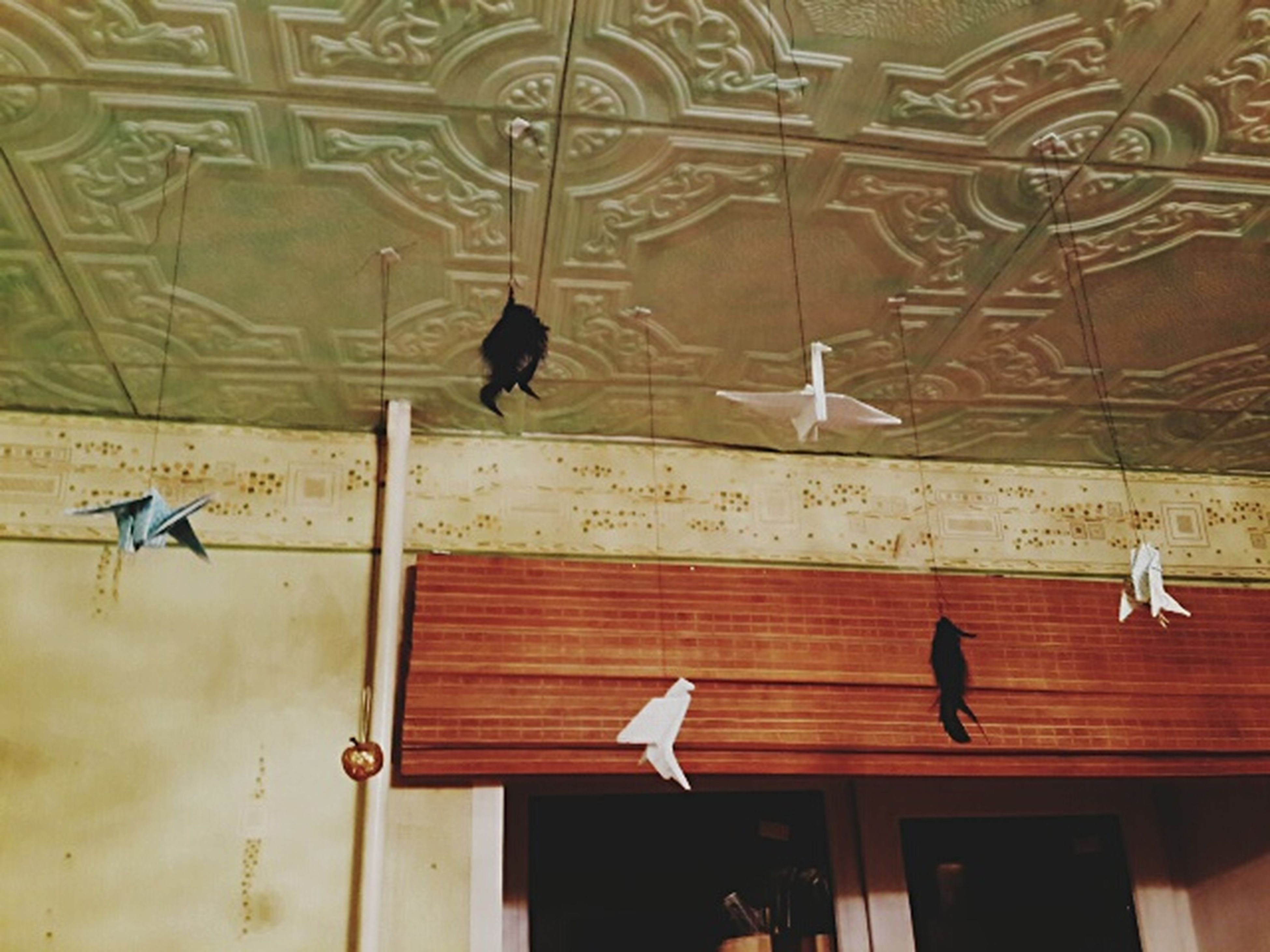 bird, architecture, built structure, animal themes, indoors, hanging, window, animals in the wild, building exterior, wildlife, low angle view, perching, wall - building feature, pigeon, house, flying, glass - material, day, no people