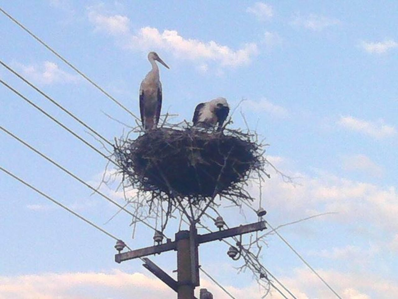 bird, animals in the wild, two animals, cloud - sky, stork, low angle view, sky, animal themes, bird nest, togetherness, perching, day, animal wildlife, outdoors, no people, white stork, nature, mourning dove
