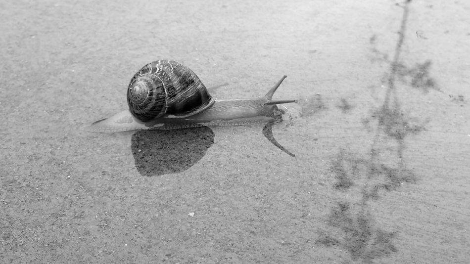 Alucination Animal Antenna Animal Shell Animal Themes Animals In The Wild Crawling Focus On Foreground Fragility High Angle View Insect Nature No People Oasis One Animal Outdoors Snail Wildlife Zoology