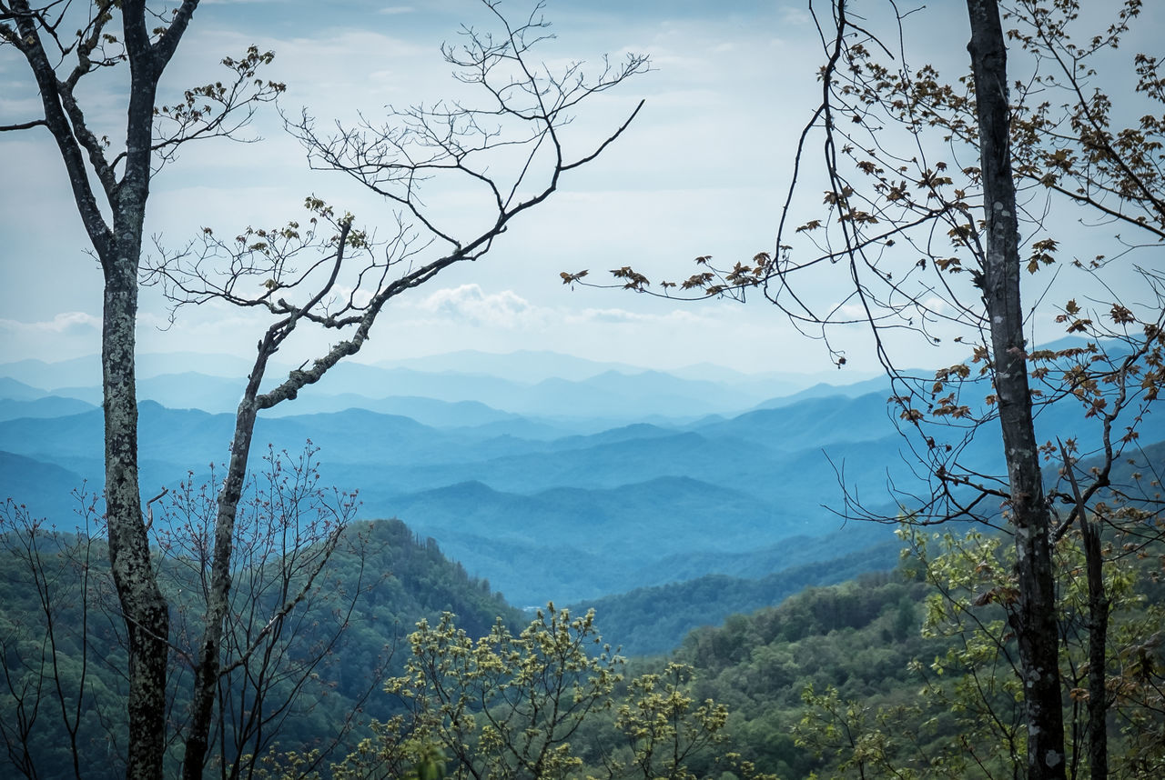 Bare Tree Beauty In Nature Blue Ridge Mountains Branch Day Forest Growth Landscape Mountain Mountain Range Nature No People Outdoors Scenics Sky Tranquil Scene Tranquility Tree