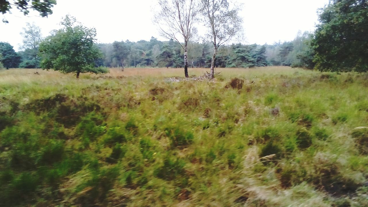 Tree Nature Landscape Green Color Beauty In Nature Grass Grassy Outdoors Nature Beauty In Nature Veluwe De Veluwe Fall Collection Hoog Soeren WoodLand Hoog Buurlo Tree September Fall