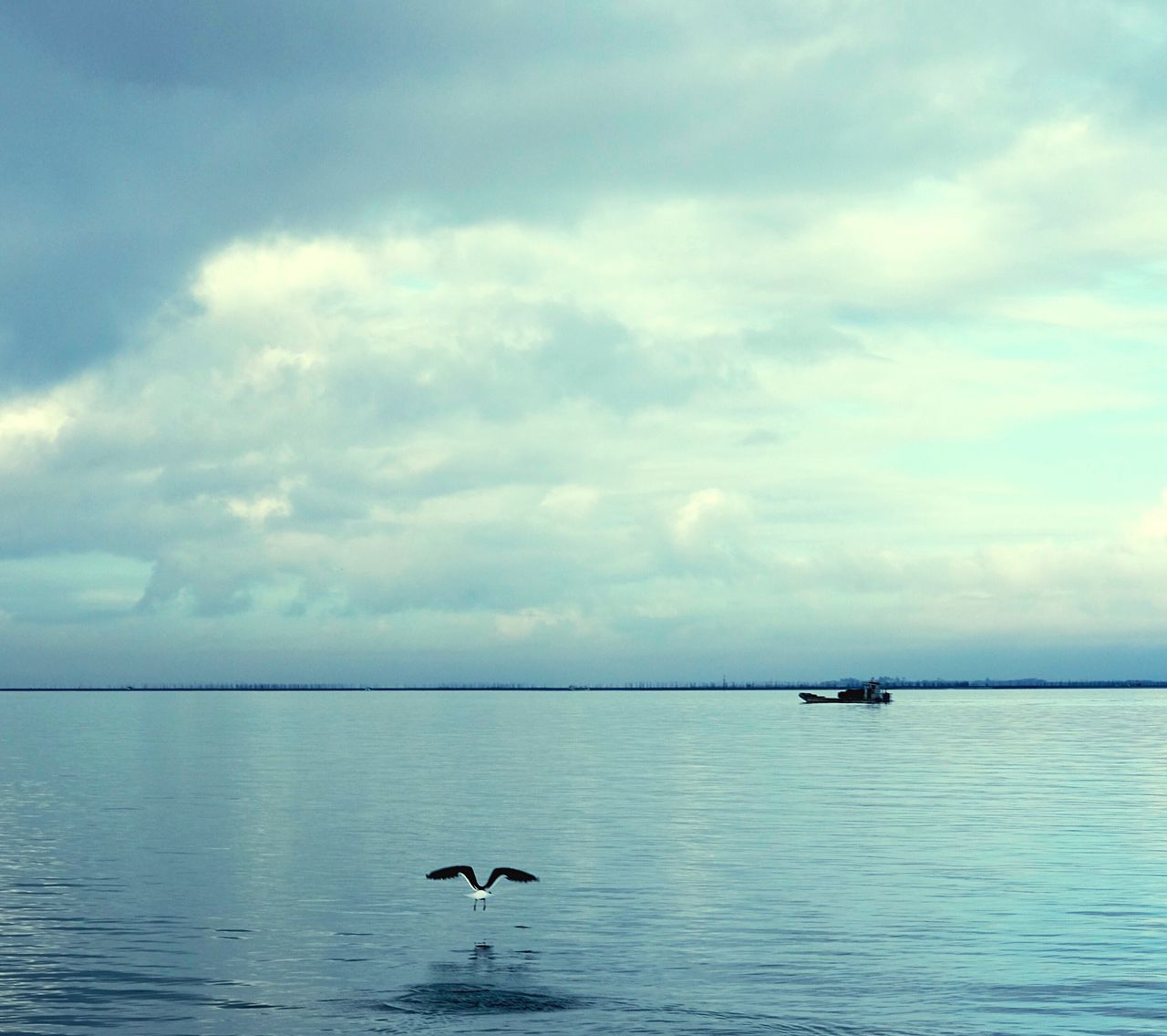 water, nature, animal themes, animals in the wild, sky, tranquility, scenics, beauty in nature, one animal, cloud - sky, tranquil scene, day, sea, bird, waterfront, no people, animal wildlife, outdoors, flying, spread wings, horizon over water